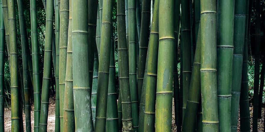bebidas-con-bambu