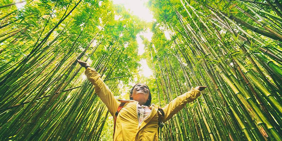 propiedades-bambu